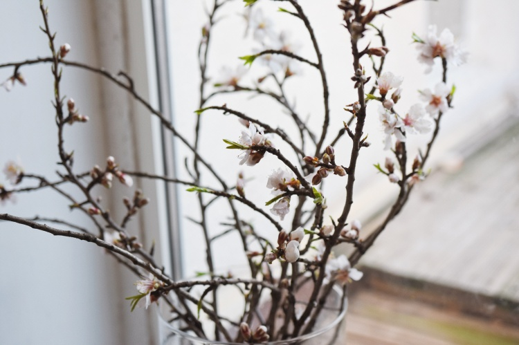 28-02-2017-cherry-blossom-flowers-window-spring