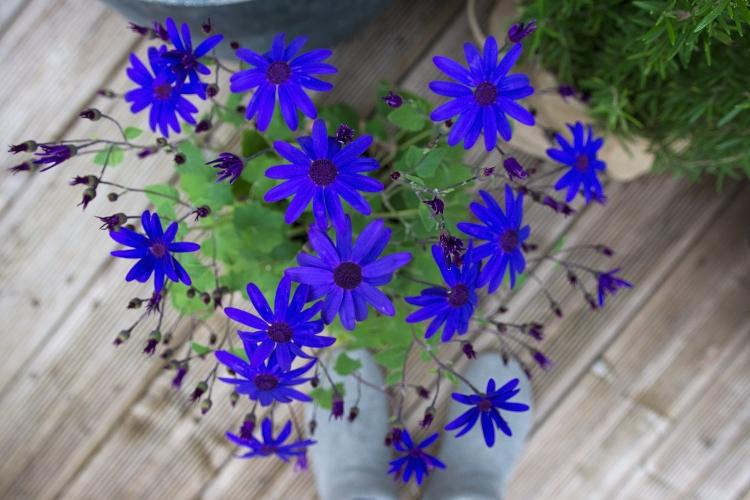 blue-flowers-garden